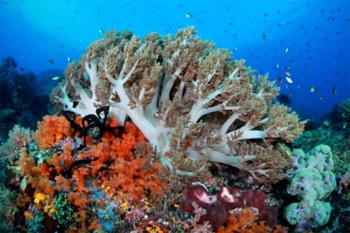 corals_raja_ampat_l.jpg