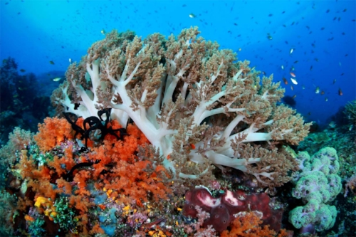Aside from being home to more than 1,500 species of fish, Raja Ampat also hosts 75% of all coral species worldwide!