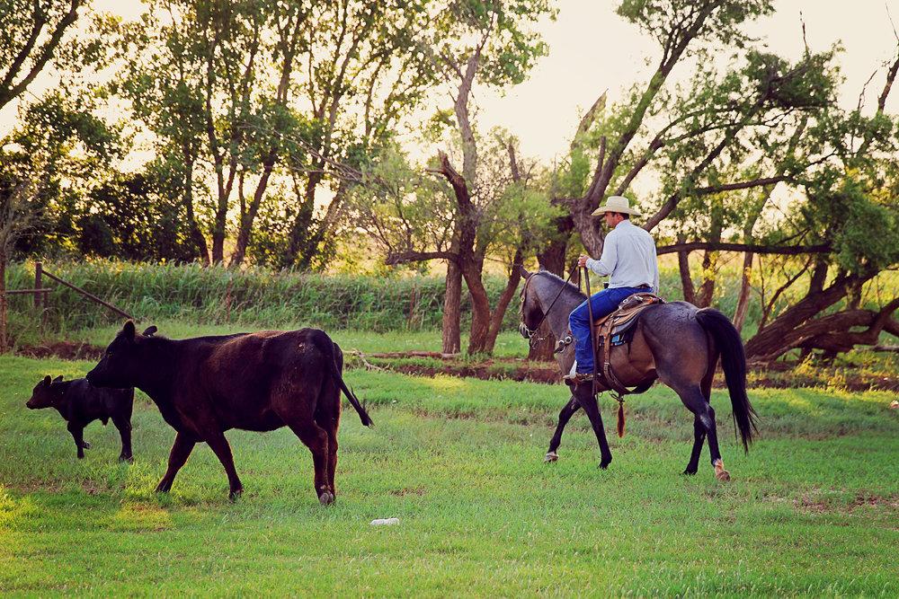 ranch2.jpg