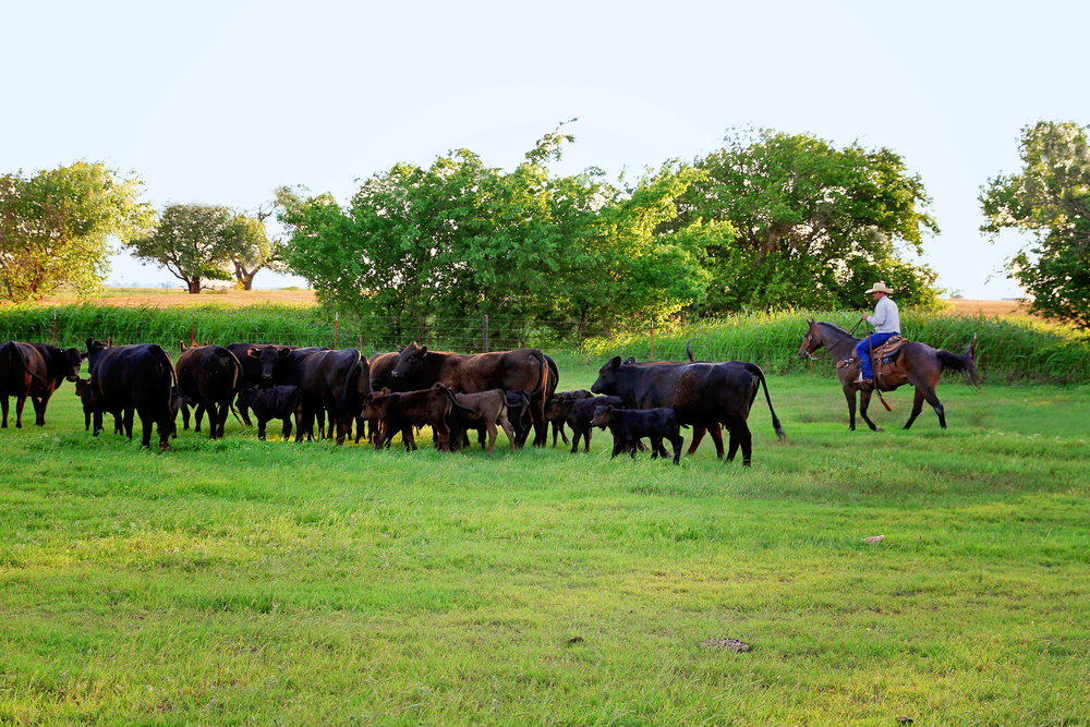 ranch3.jpg