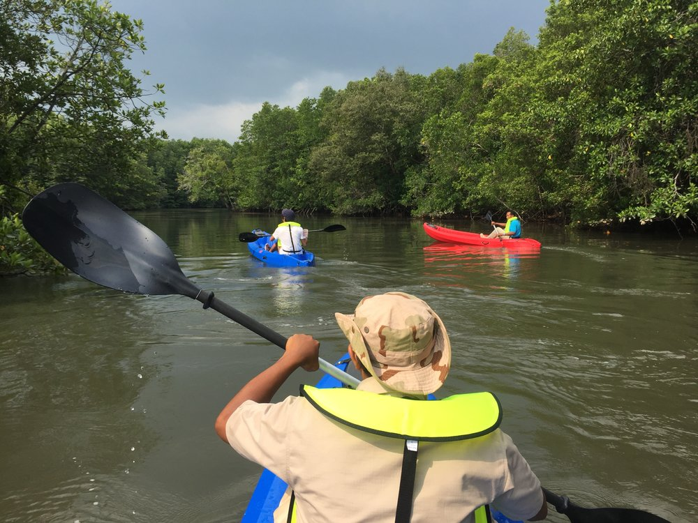 Mangrove Kayak.jpeg