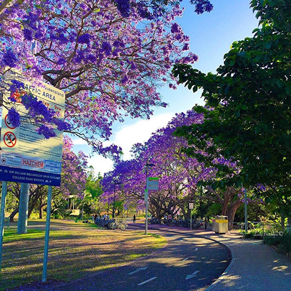 University of Queensland, St Lucia campus.