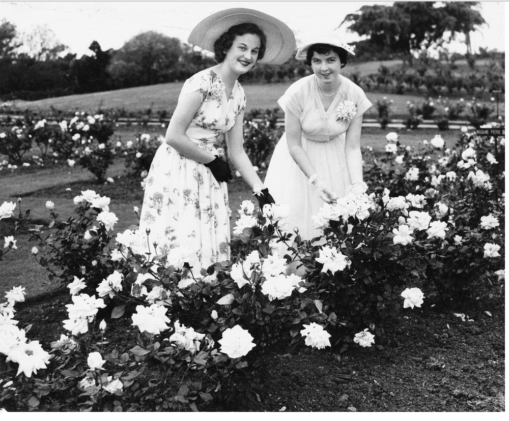 Miss P. Conrad and Miss C. McGuire in the rose garden at New Farm Park in 1954. Image credit - State Library of Queensland