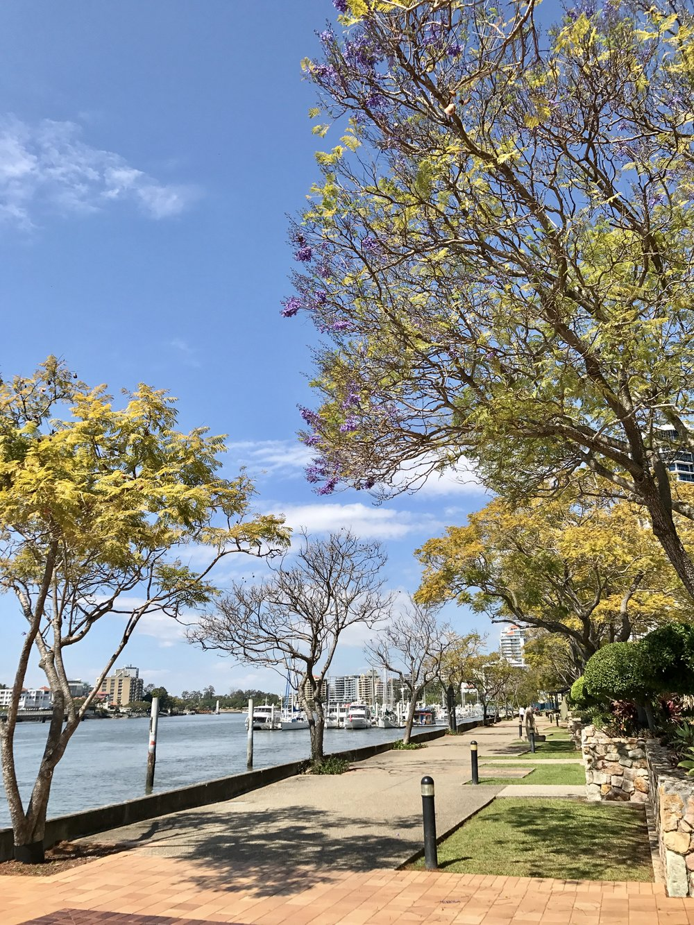 Look out for Jacaranda blooms -