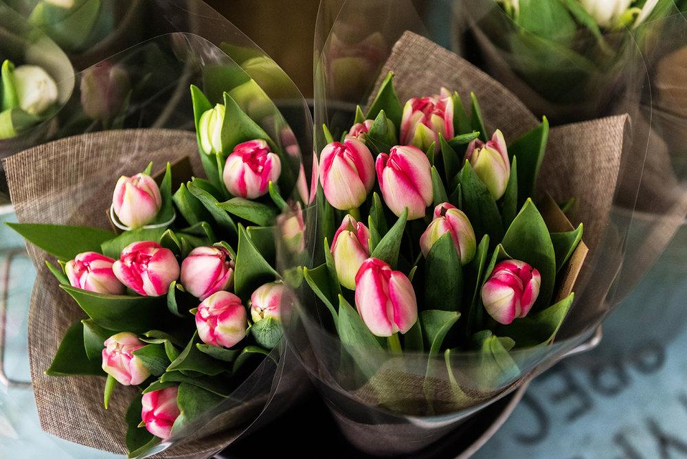 NFM Tulips.jpg