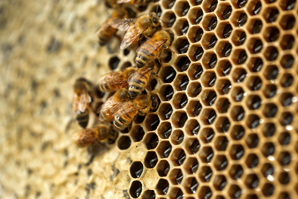 Learn about beekeeping in an urban setting with Bee One Third, Neighbourhood Honey as part of the forthcoming Parks Alive program at Roma Street Parklands.