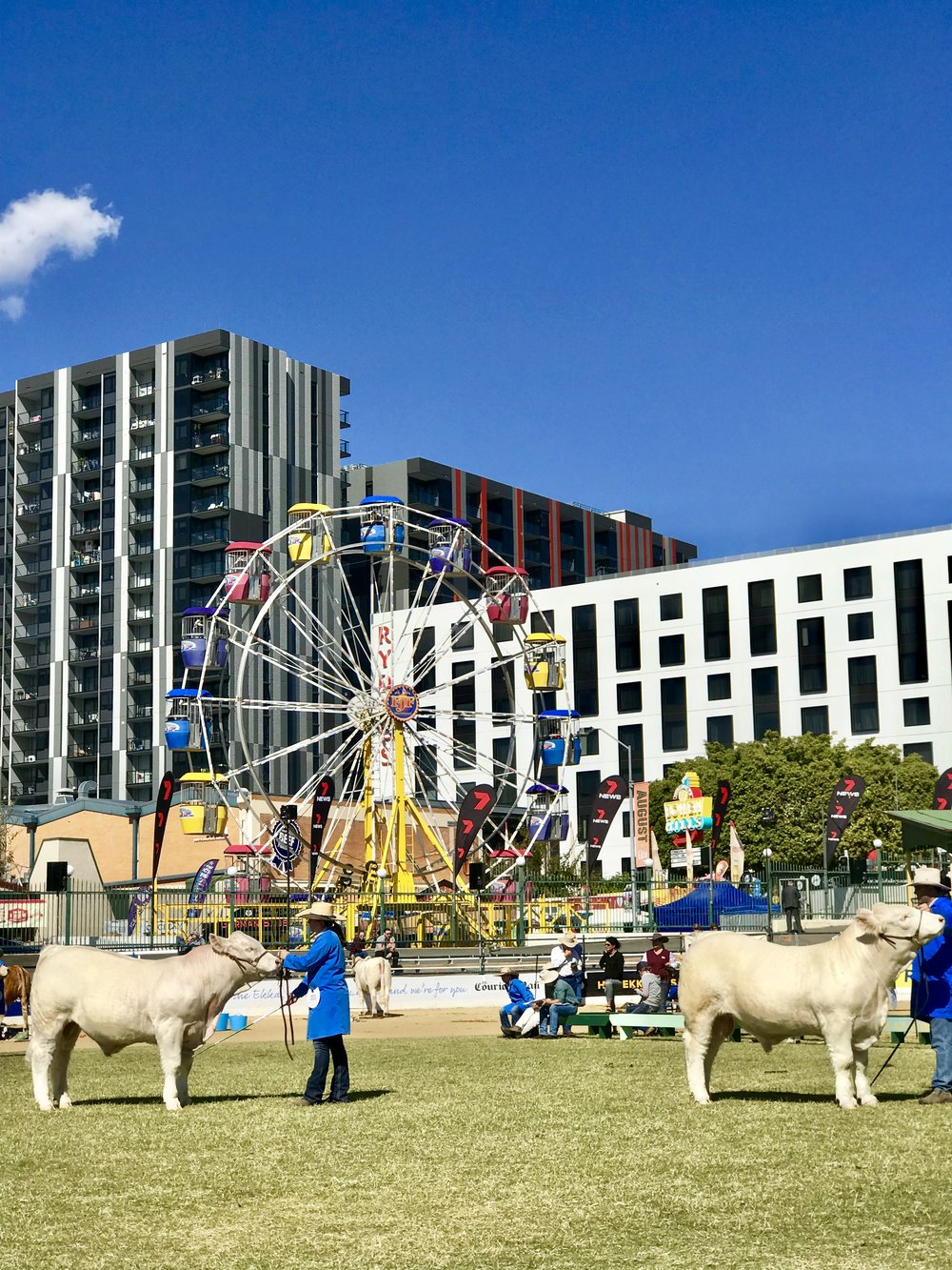 Lady Brisbane Ekka Copyright