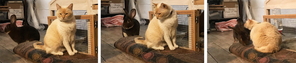 a typical rabbit and cat encounter, it was brief— Munch (rabbit) ran off leaving Louise confused