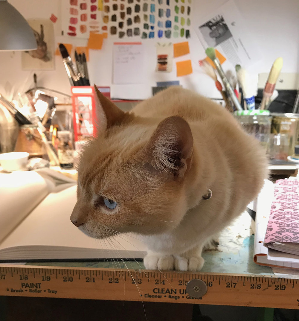 Wheezy on drafting table