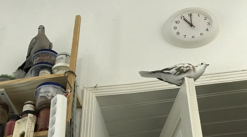 nest attempt #12