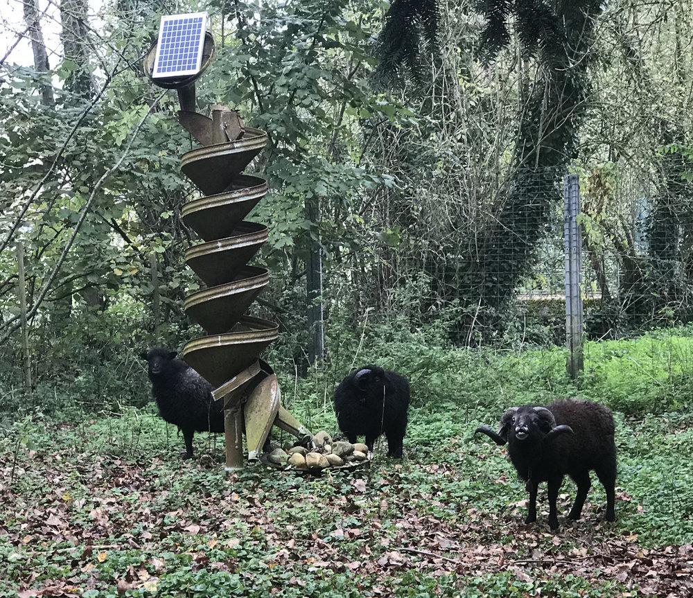 sheep w sculpture S.jpg