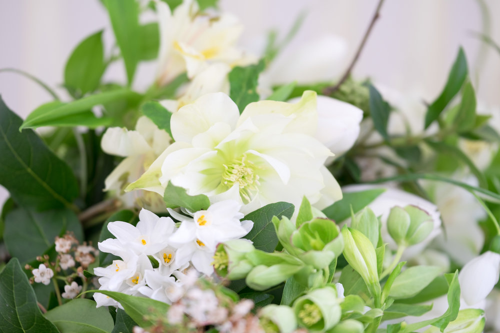 Here Hellebore Foetidus frames the paperwhite narcissus