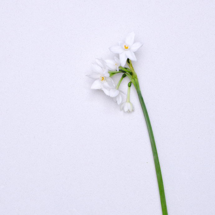 How to shoot flowers on a white background the british flowers book emmadaviesphotography 1445 2g mightylinksfo