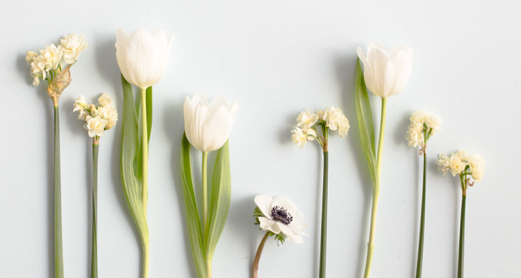 How to shoot flowers on a white background the british flowers book guest post emma davies mightylinksfo