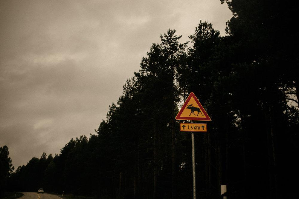 Finland Highway Deer Sign