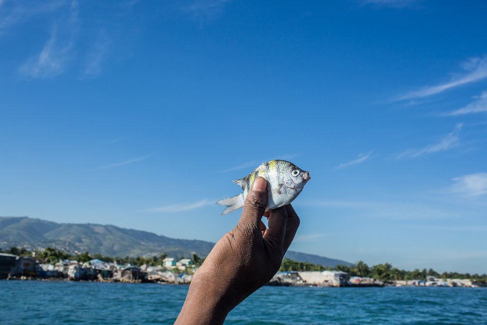 A small fish caught for eating by fishermen Jean Claude Pierre and Jean Claude Joseph on Monday, December 15, 2014 in Port-au-Prince, Haiti.