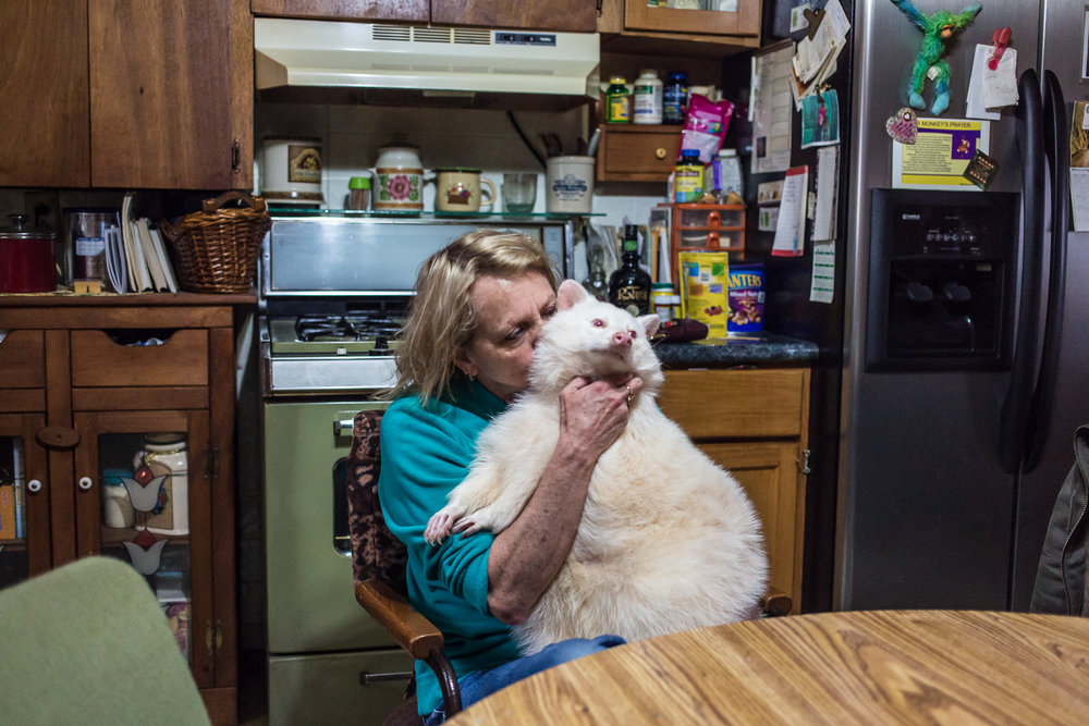Trish Backer holds her pet albino raccoon Reba in her kitchen on Sunday, November 11, 2012 in Webster City, IA.