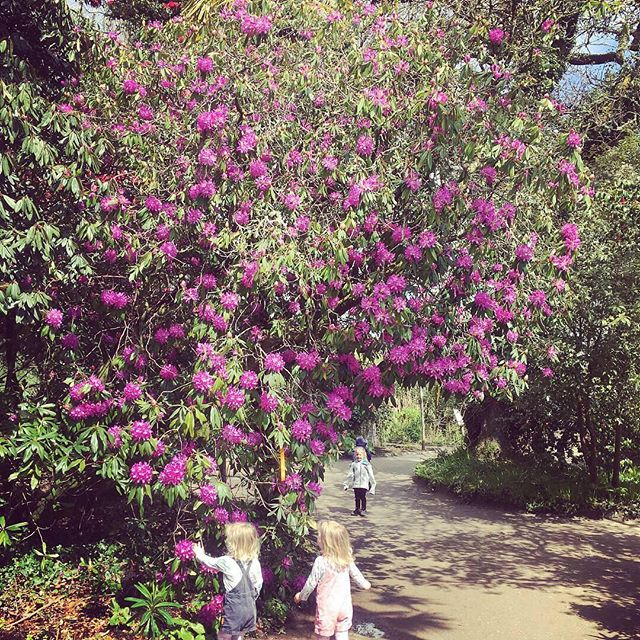 @heligangardens is popping with colour at this time of year. There's plenty of Easter activities for the kids from Hobby Horse jumping, to Easter bonnets to fishing rubber duckies. Lots of fun for all ages in a beautiful setting 🌸🌺🌷🌴🌿🐰