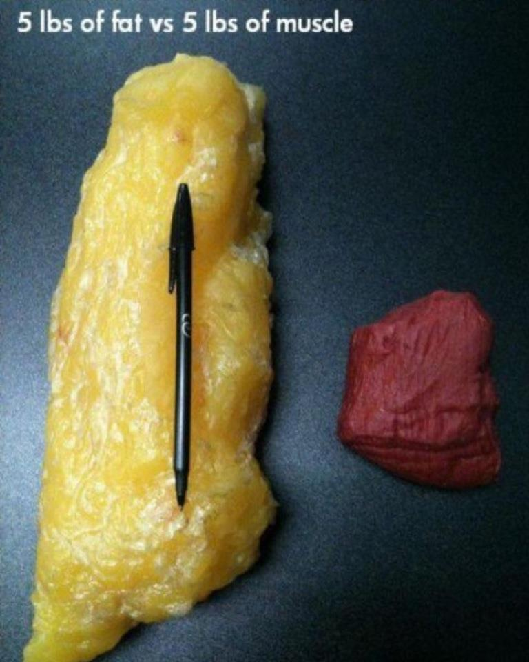 5-pounds-of-fat-vs-5-pounds-of-muscle-mass-comparison1