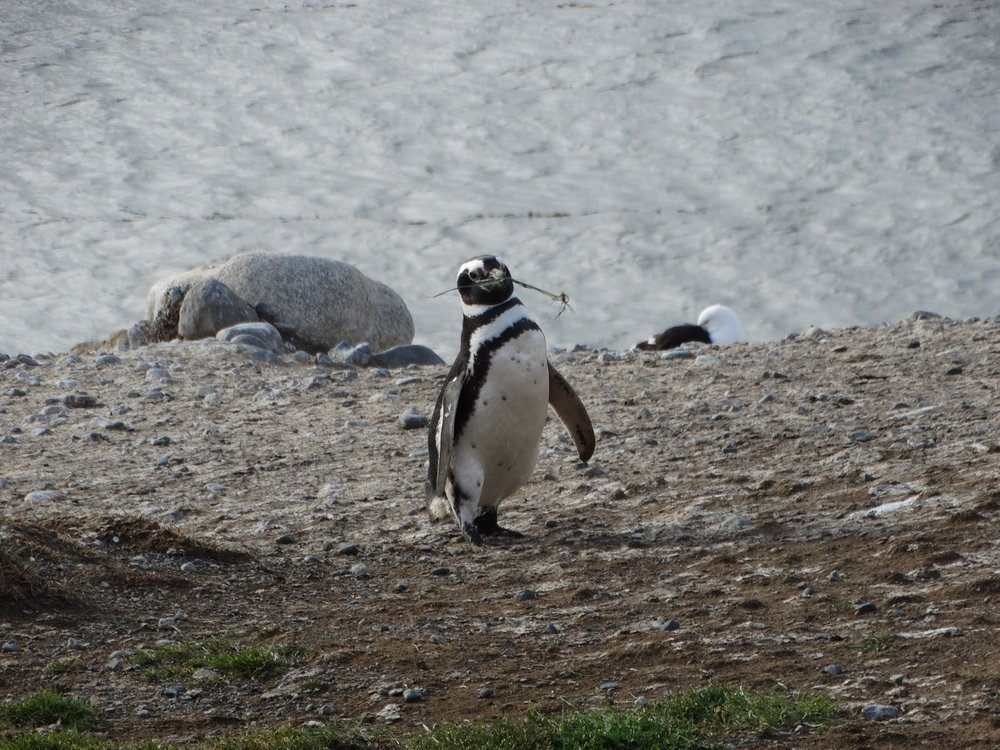 Penguin with stick