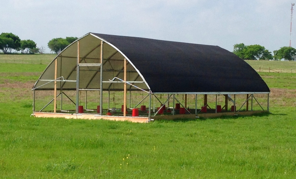 Mobile range floor-less chicken coops protects chickens from predators while letting them enjoy grass, sun and socializing. Coops are moved everyday so chickens recieve fresh grass daily.