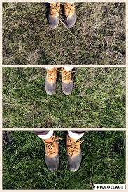 The top to bottom image of the process of animals rotationally grazing and bringing back the soil.