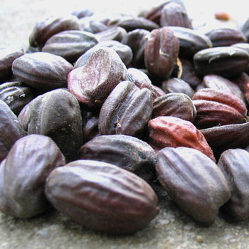 organic-jojoba-seeds.jpg
