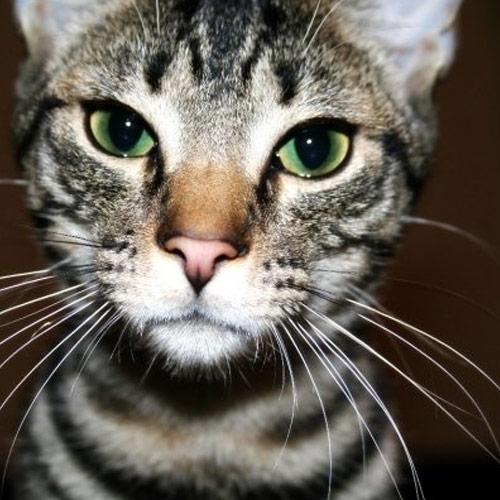 My-Kitty-Apple.jpg