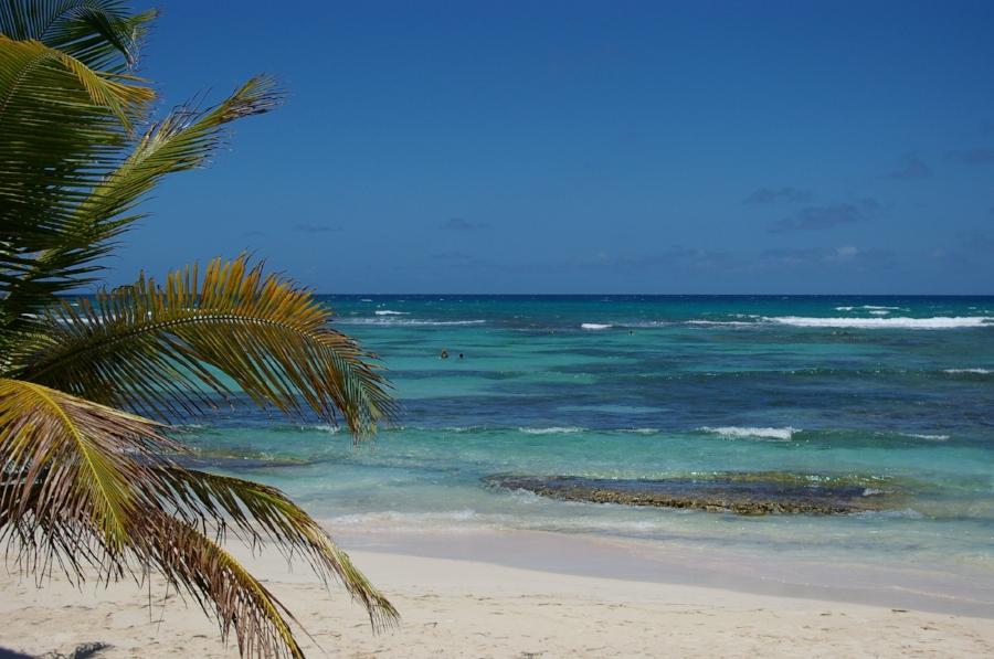 stockvault-palm-tree-at-the-beach105345.jpg