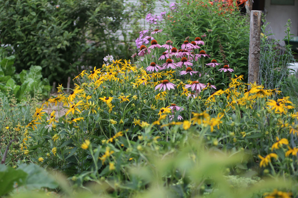 Sacha in garden