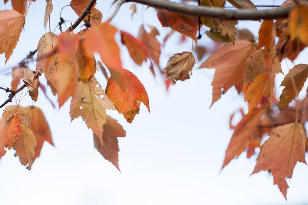 fall_family_fun_2_0017.jpg