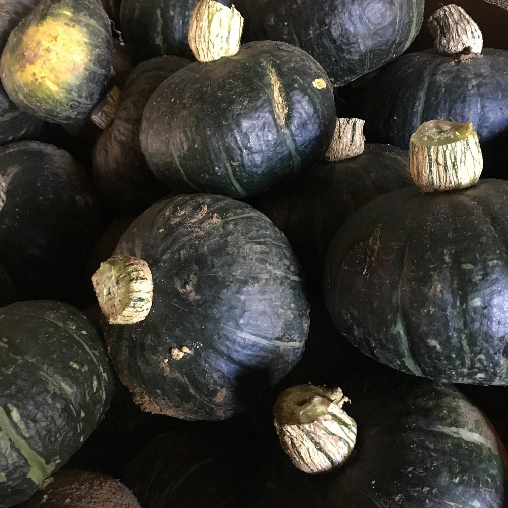 helsing junction farms csa kabocha squash
