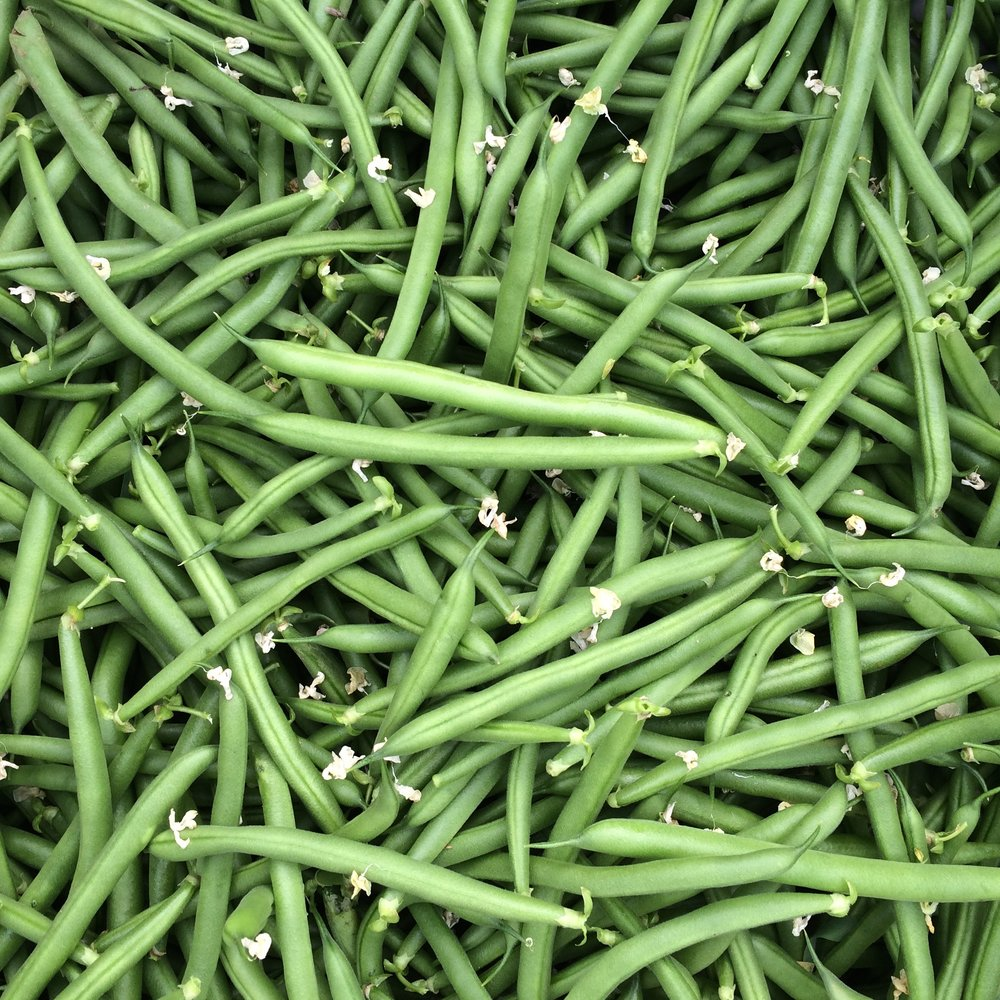helsing junction farms csa green beans