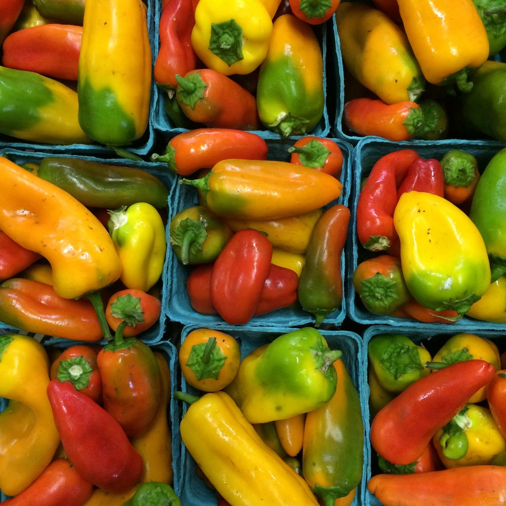 helsing junction farms csa lunchbox peppers