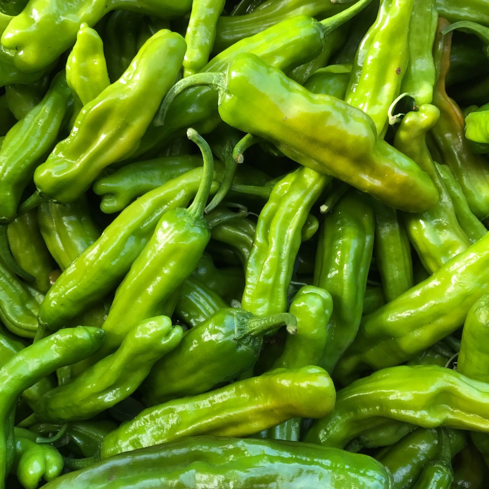 helsing junction farms csa shisito peppers