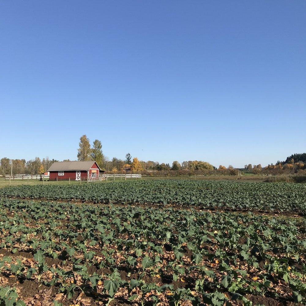 Helsing Junction Farms CSA Fields Crops