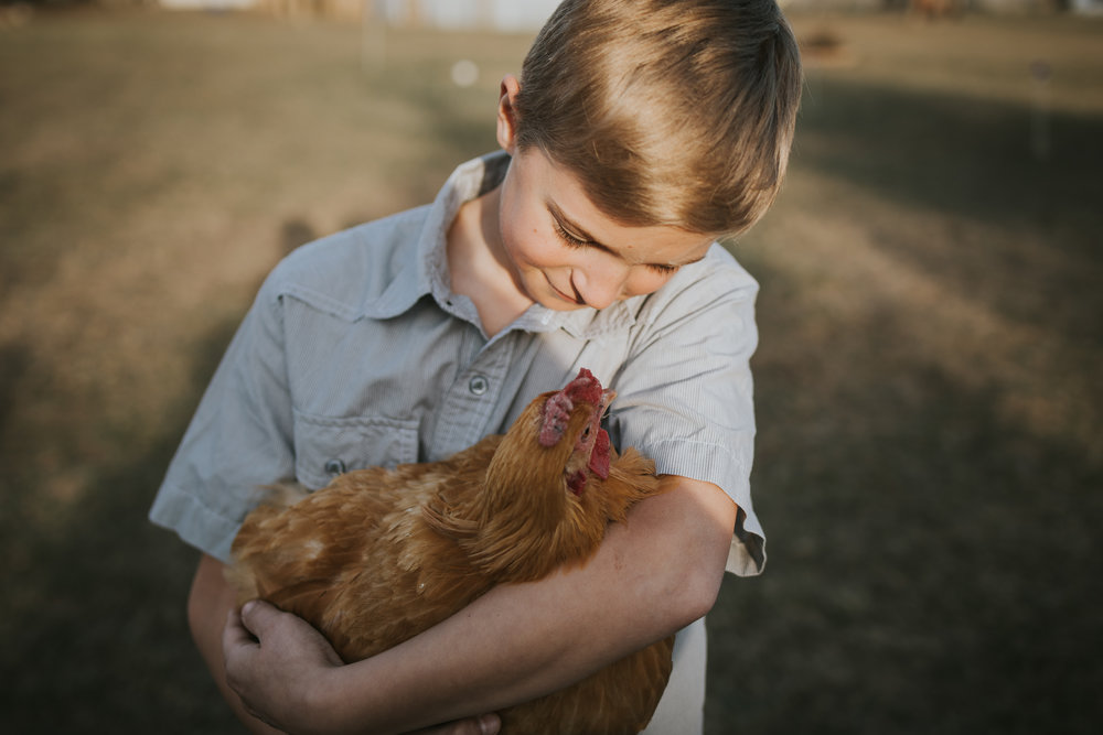blonde haired boy holding a chicken - Minneapolis Family Photography