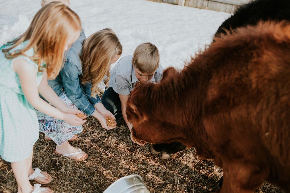 children feeding cows - Minnesota Child Photographer