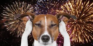 dogs and fireworks.jpg