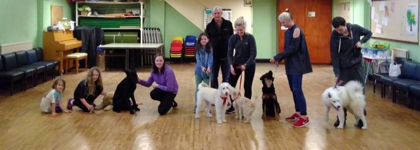 puppy school belfast 2017.jpg