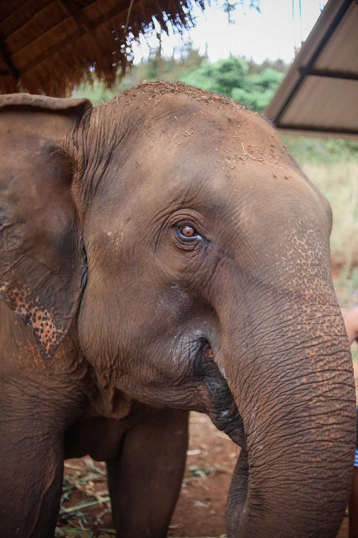 elephant_blog-2.jpg