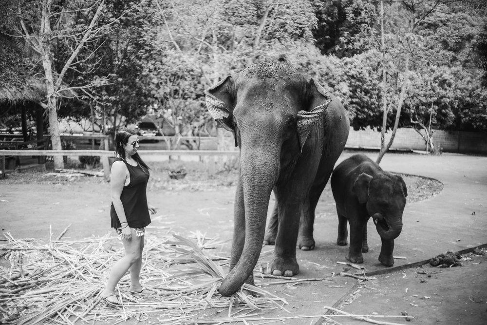 elephant_blog-3.jpg