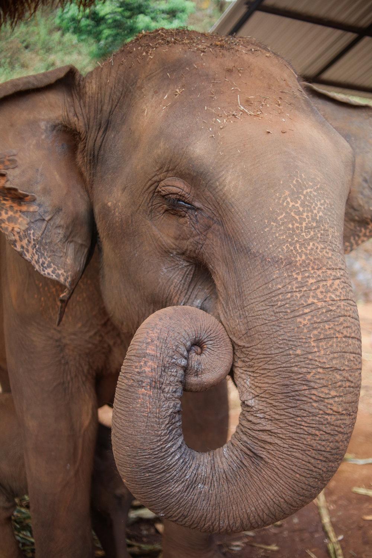 elephant_blog-4.jpg