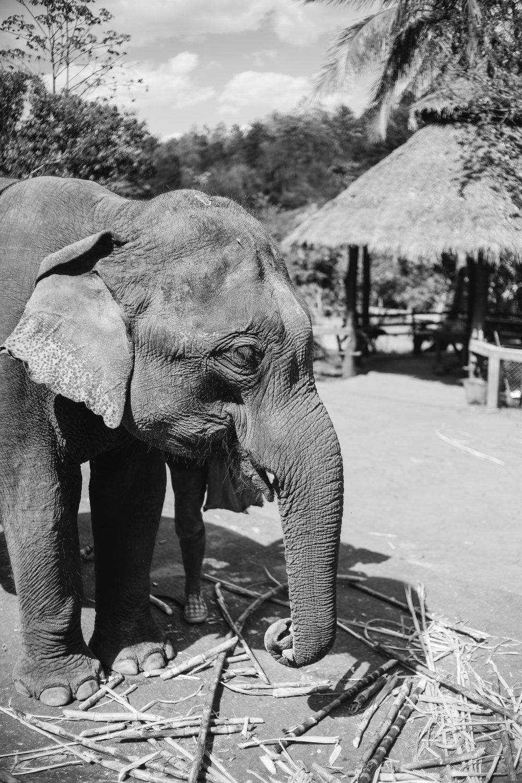 elephant_blog-6.jpg
