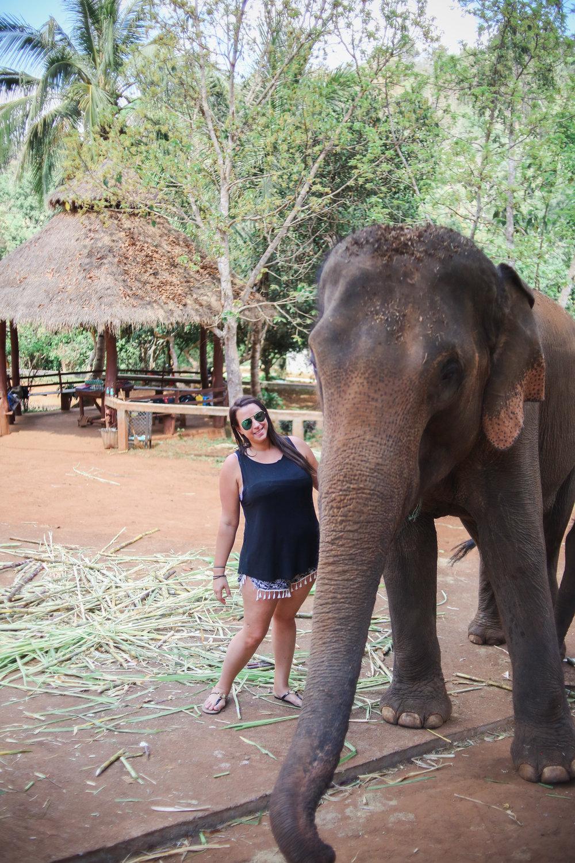elephant_blog-5.jpg