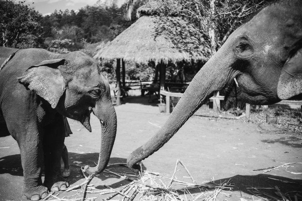 elephant_blog-10.jpg