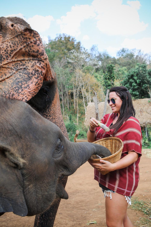 elephant_blog-13.jpg