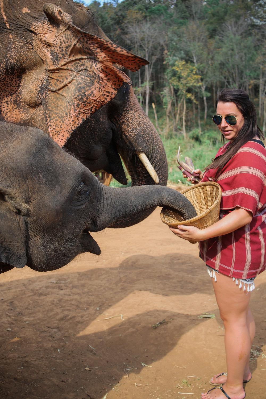 elephant_blog-14.jpg