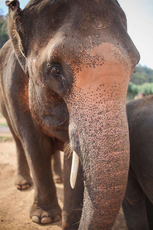 elephant_blog-16.jpg