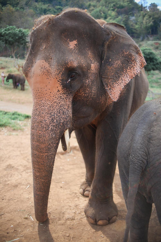elephant_blog-17.jpg